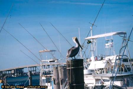 Beach area singer island palm beach shores sailfish marina pelican