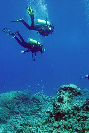 Aqaba diving in aqaba virtourist com aqaba for Aqaba dive
