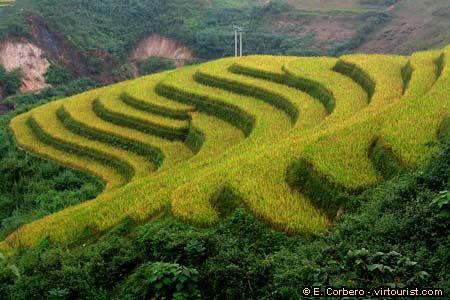 Northeast vietnam rice terraces vietnam virtourist com for What are terraces